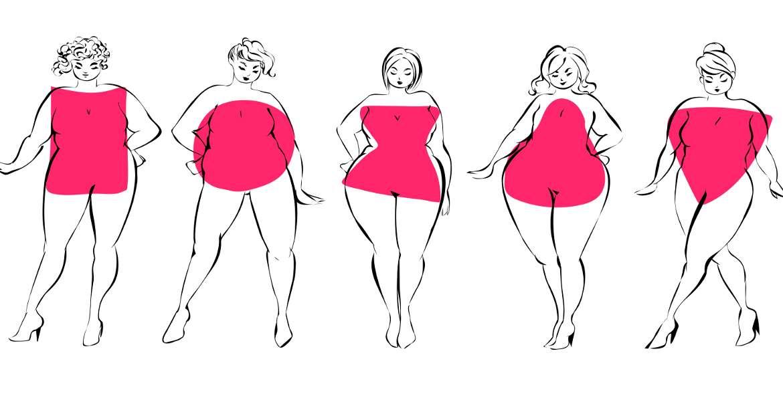 La distribution de la graisse chez l'humain